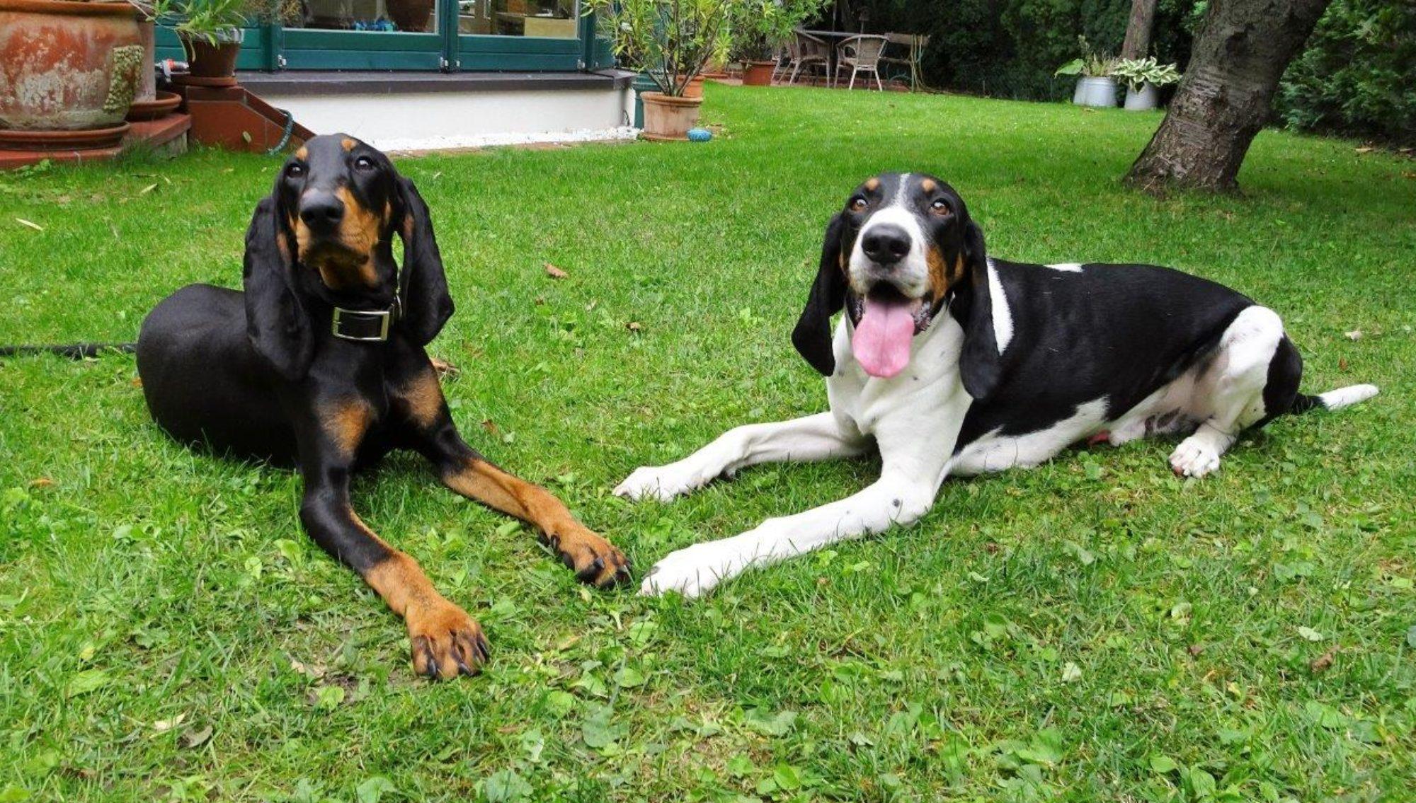 Klub für Schweizer Laufhunde